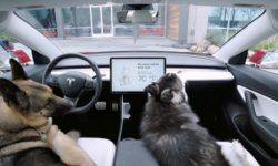 "Electric vehicles Tesla appeared ""dog"" mode"