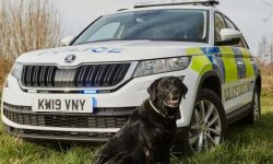 Crossover Skoda Kodiaq sent to carry police dogs