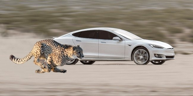 """Strut Cheetah"": Tesla learns to ""shoot"" even more spectacular"