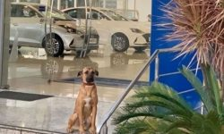 The Hyundai dealership appeared four-legged consultant