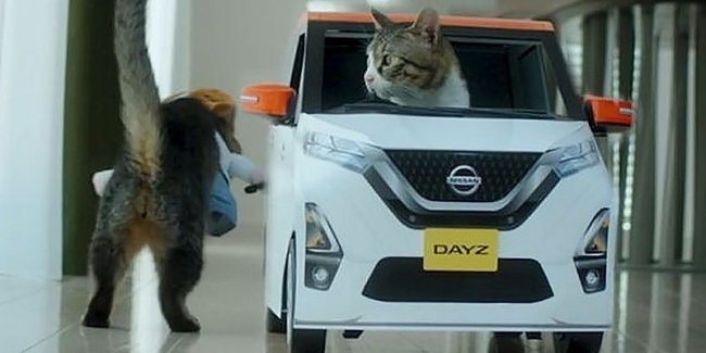 Prohibited reception from Nissan: advertising with the participation of cats
